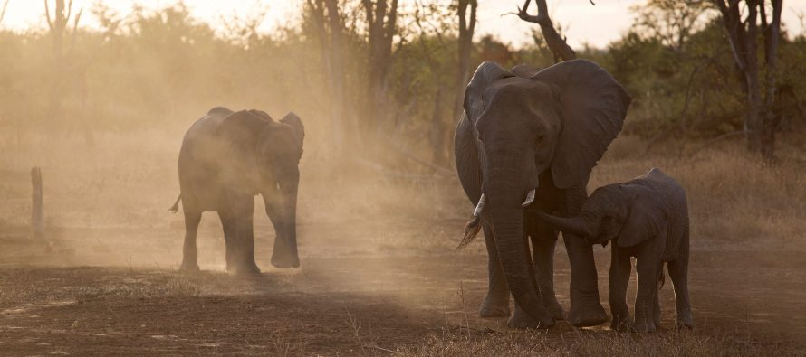 Forevermark Unveils a Series of Six Short Films Telling The Increasing Journey Of Moving Giants